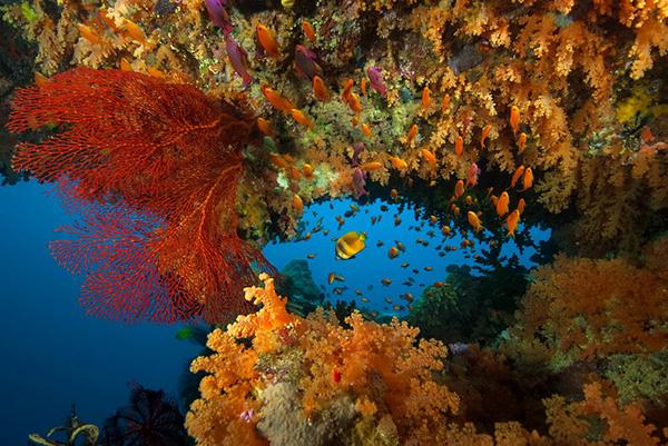 Weichkorallen Fidschi