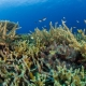 Korallenriff - Amun Ini Beach Resort & Spa