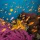 Fidschi - Welthauptstadt der Weichkorallen